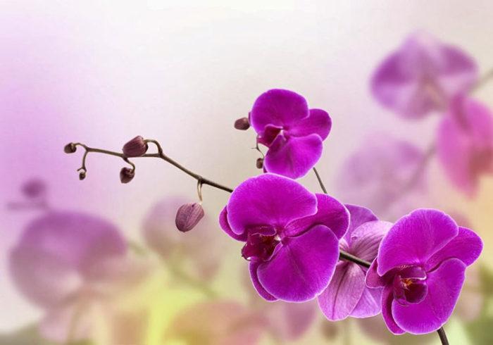 Растения/кашпо