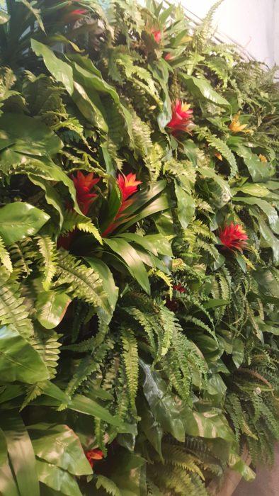 Растения, Фитостены